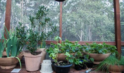 Vege Garden - 2